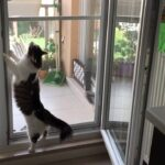 çelik telli kedi sinekliği